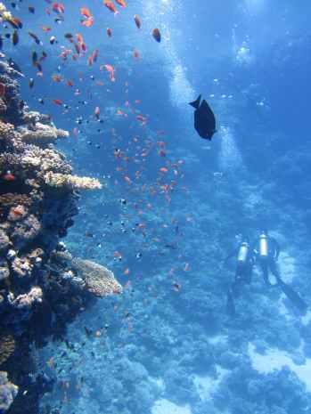 divers-underwater-ocean-swim-68767.jpeg